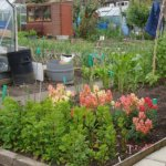 allotment 05
