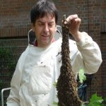 Bee Swarm & Keeper 03