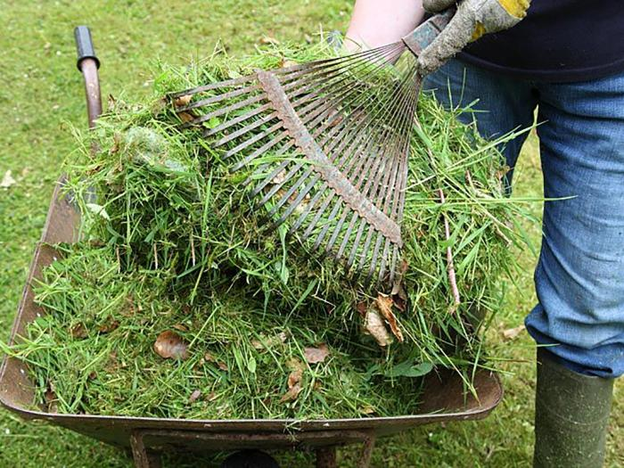 Grass Cuttings 01