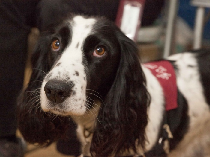 Hearing Dogs for Deaf People 01