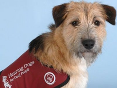Hearing-Dogs-for-Deaf-People