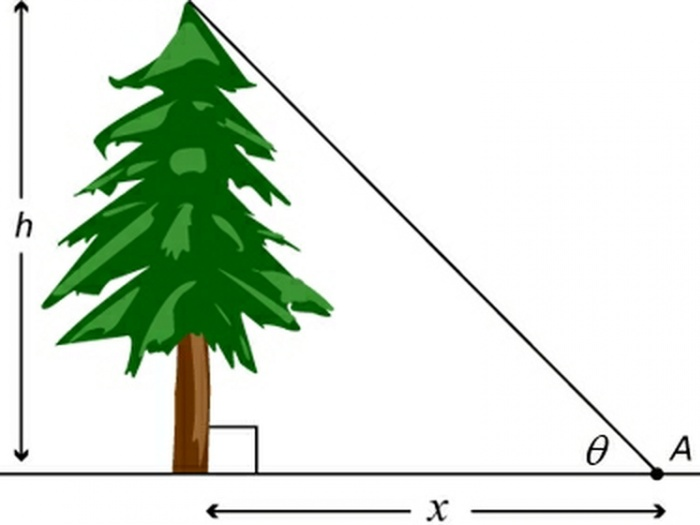 Measuring Tree Height 01a