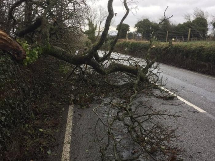 Storm Doris Trees02