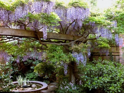 Turn-end-garden-wisteria
