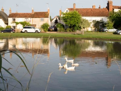 White Ducks at Church End